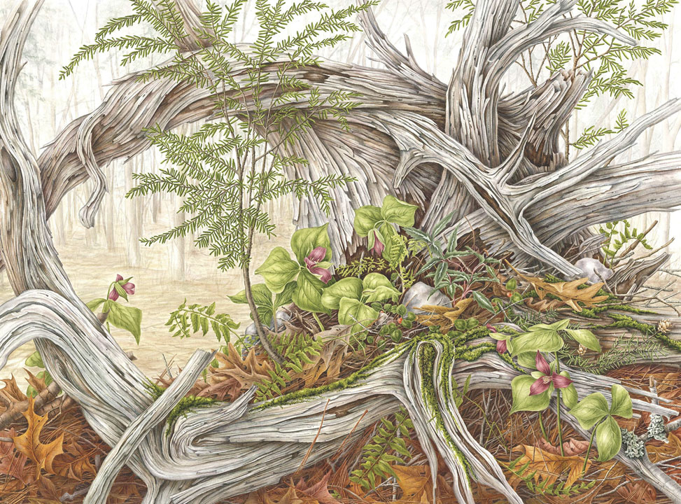 Out Of The Woods American Society Of Botanical Artists