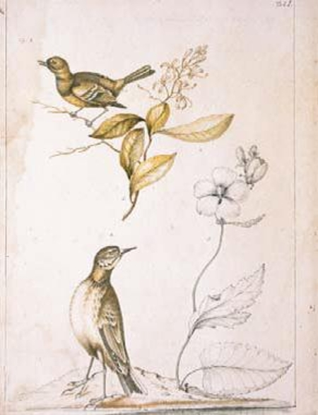 Ford Athens Ga >> William Bartram as a Natural History Artist   American ...