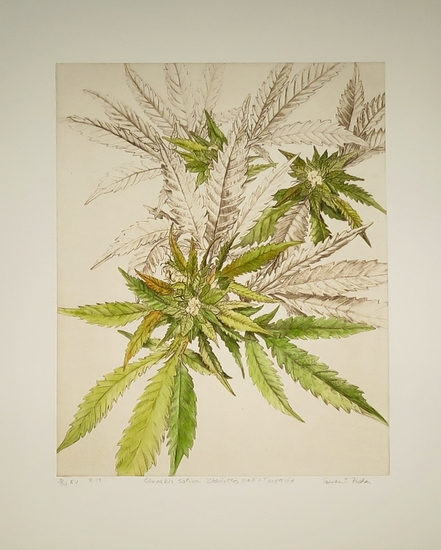 Susan T. Fisher | American Society of Botanical Artists